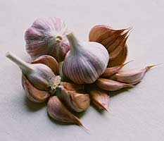 Purple Stripe Garlic - Chesnok Red