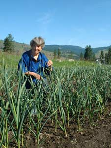 Growing garlic for seed  in British Columbia